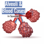 Alveoli and blood gases in Spanish