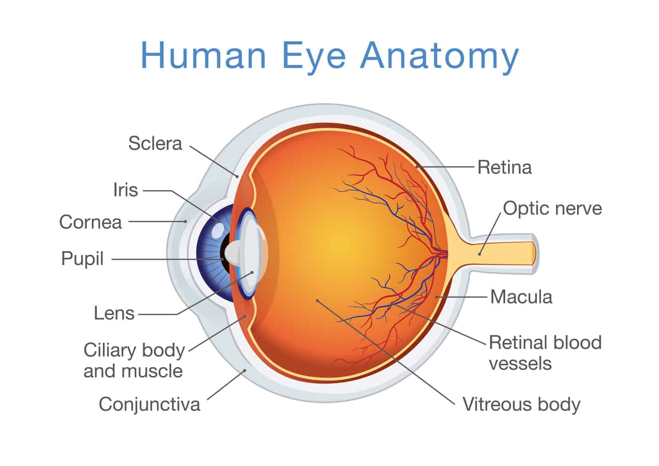 Ec06 Eye Anatomy Podcasts By Doc Molly